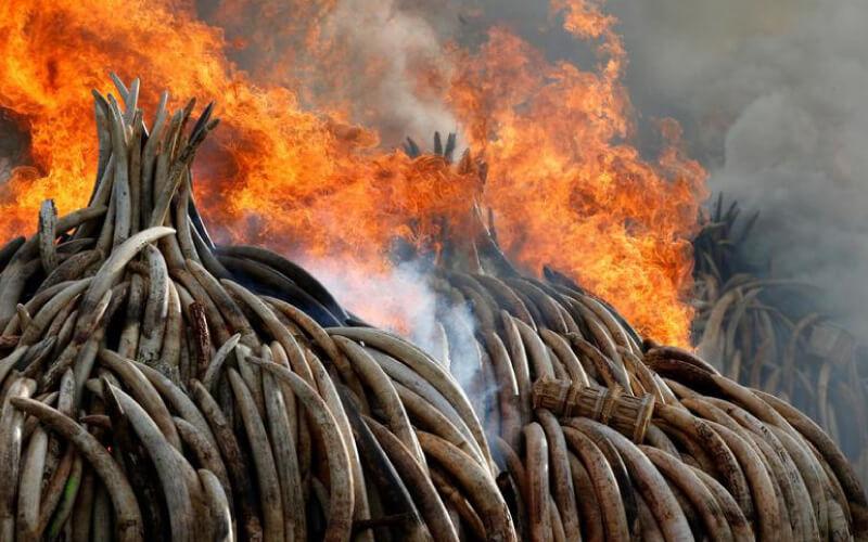burning-ivory