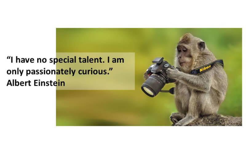 monkey-dslr