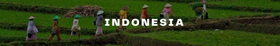 Indon TM