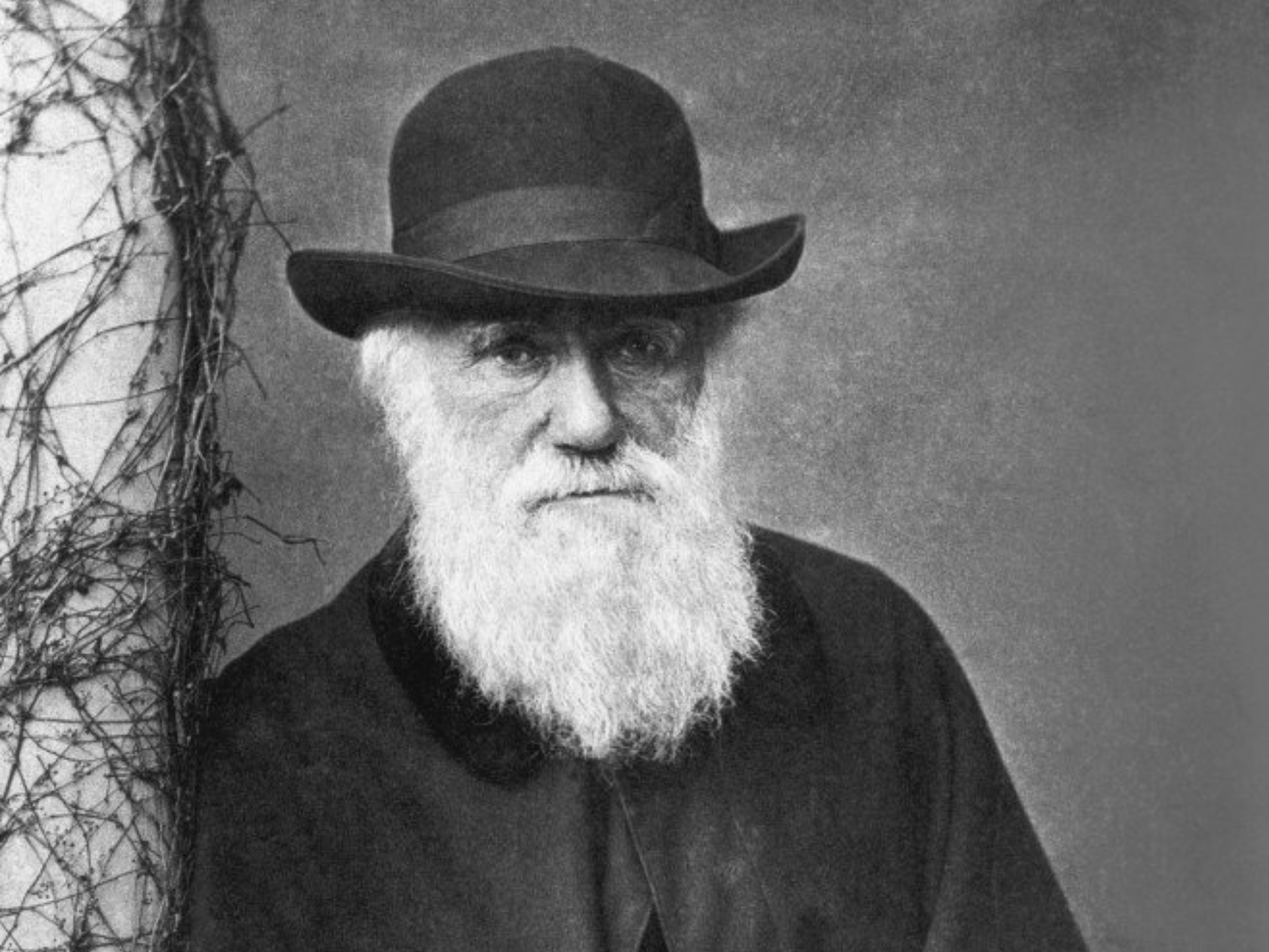 Charles Darwin, pictured in 1881, is remembered for the concept of natural selection but it was proposed far earlier, by the Arab writer Al-Jahiz. File photo